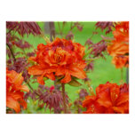 El arte de la oficina imprime el jardín anaranjado impresiones