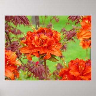 El arte de la oficina imprime el jardín anaranjado póster