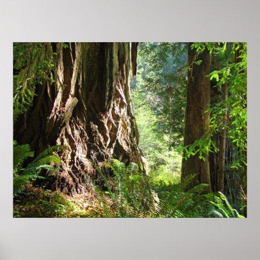 El arte del bosque de los árboles de la secoya imp impresiones