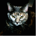 El arte del gato fotoescultura vertical