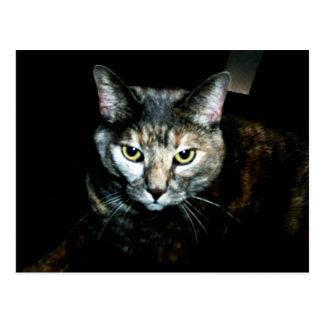 El arte del gato tarjetas postales