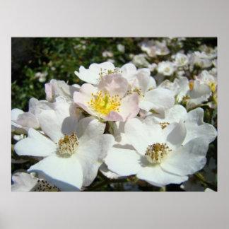 El arte floral del paisaje de la rosaleda imprime  posters