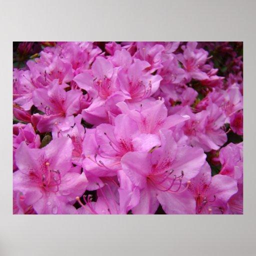 El arte ROSADO de las flores de la azalea de las A Póster