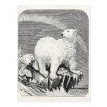 El ártico de los 1800s del oso polar del vintage l tarjetas postales
