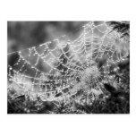 El artista de la naturaleza - el Web de araña - Postal