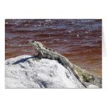 El asolear de la iguana felicitaciones