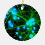 El Astrocyte es células de Glial asteroides en el Adorno Navideño Redondo De Cerámica
