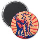el atacar de carga africano del elefante de toro r imanes