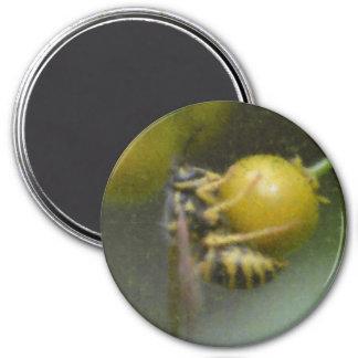 El avispón y la baya imán redondo 7 cm