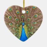 El azul del pájaro del pavo real empluma el orname ornamentos para reyes magos