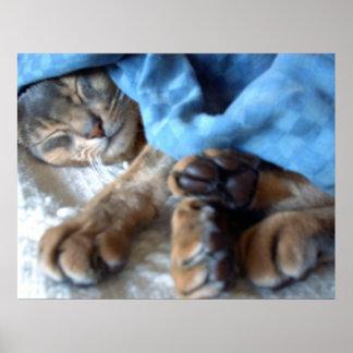 El azul el dormir Aby el gato en azul Póster