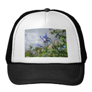 El azul florece a la fiesta de jardín del destino  gorras