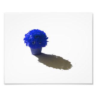 El azul florece el cubo y la sombra blancos fotografía