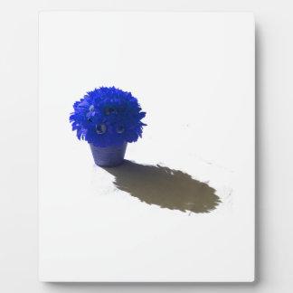 El azul florece el cubo y la sombra blancos placas con foto