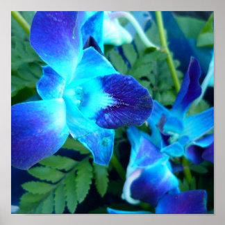el azul florece el poster de la naturaleza