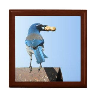 El azul hermoso friega el pájaro y el cacahuete Gi Joyero Cuadrado Grande