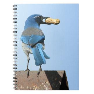 El azul lindo friega el pájaro de Jay con el Libretas