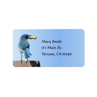 El azul lindo friega el pájaro de Jay con la etiqu Etiquetas De Dirección
