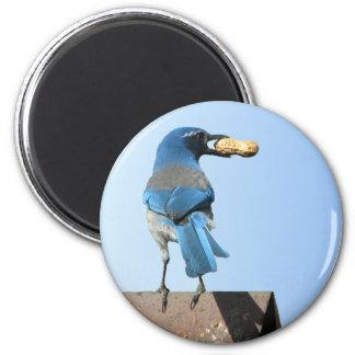 El azul lindo friega el pájaro y el cacahuete de imán redondo 5 cm