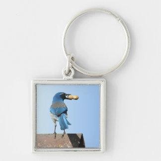El azul lindo friega el pájaro y el cacahuete de J Llavero Cuadrado Plateado