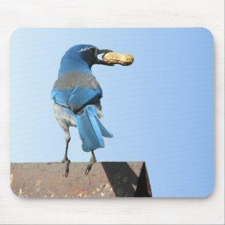 El azul lindo friega el pájaro y el cacahuete de J Mouse Pad
