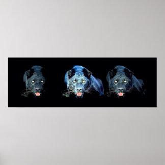 El azul negro salvaje de los ojos de gato de póster