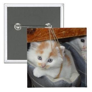 El azul observó, Brown y gatito remendado blanco Pin Cuadrado