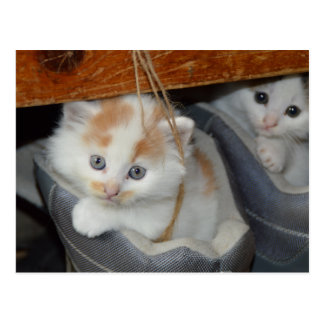 El azul observó, Brown y gatito remendado blanco Postales