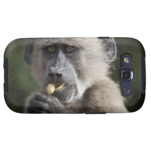 El babuino de Chacma juvenil (ursinus del Papio) c Funda Para Samsung Galaxy S3