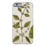 """El bálsamo, platea 27 """"de un herbario curioso"""", funda de iPhone 6 barely there"""