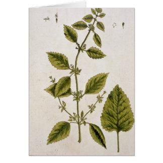 """El bálsamo, platea 27 """"de un herbario curioso"""", pu tarjeta de felicitación"""