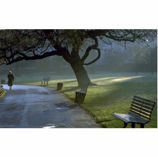 El banco, árbol, regentes parquea, Londres, Inglat Esculturas Fotograficas