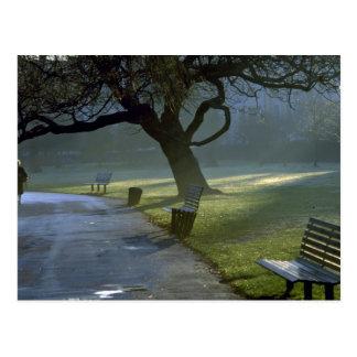 El banco, árbol, regentes parquea, Londres, Tarjetas Postales