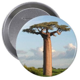 El baobab Madagascar de Grandidier Pin