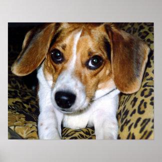 El beagle (#1) posters
