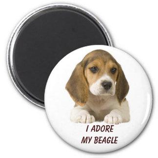 El beagle adora el imán