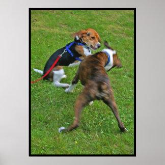 El beagle elimina la competencia… póster