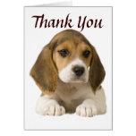 El beagle le agradece cardar tarjetas