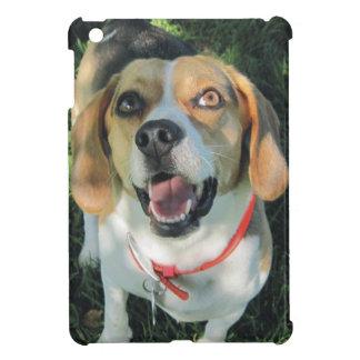 El beagle leal