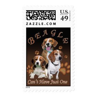 El beagle no puede tener apenas un franqueo