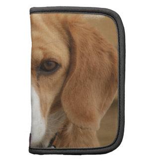 El beagle representa el folio de la cartera organizadores