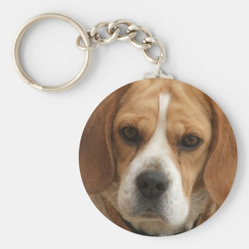 El beagle representa llavero