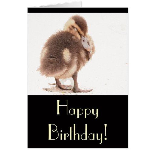 El bebé Ducks el pato silvestre de los animales de Tarjeta De Felicitación