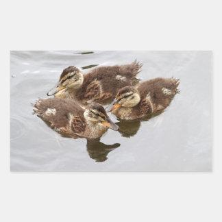 El bebé Ducks la foto Pegatina
