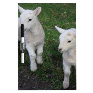 El bebé lindo del rancho de la granja hermana el tablero blanco