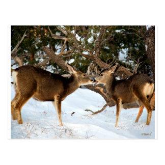 El besarse de dos ciervos postal
