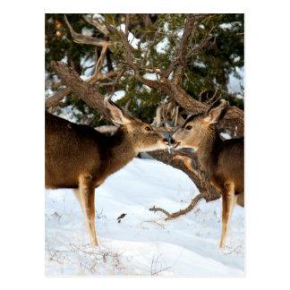 El besarse de dos ciervos postales