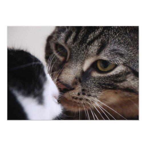 El besarse de dos gatos anuncio personalizado