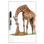 El besarse de la jirafa y del becerro del bebé tableros blancos