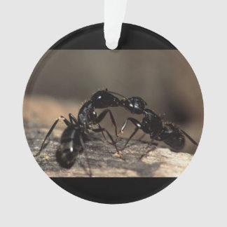 el besarse de las hormigas